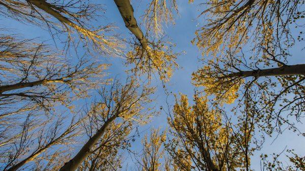 """El """"baño de bosque"""", la terapia ideal para el otoño"""