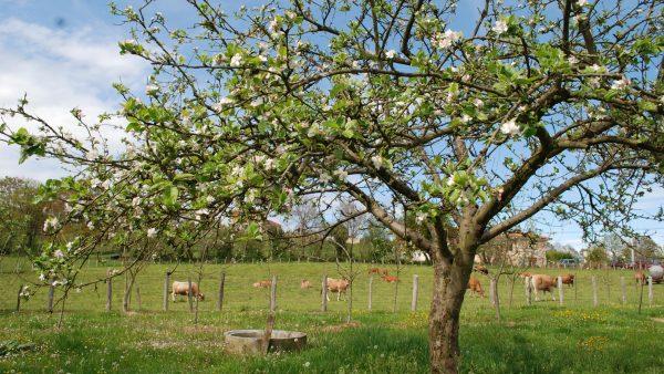 El censo de polinizadores del manzano asturiano